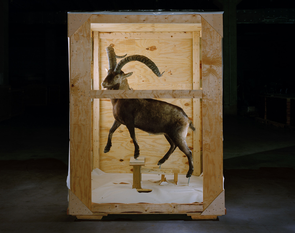 Smithsonian Ungulate, 2005