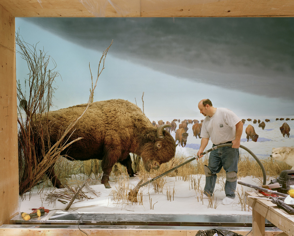 Man With Buffalo, 2007