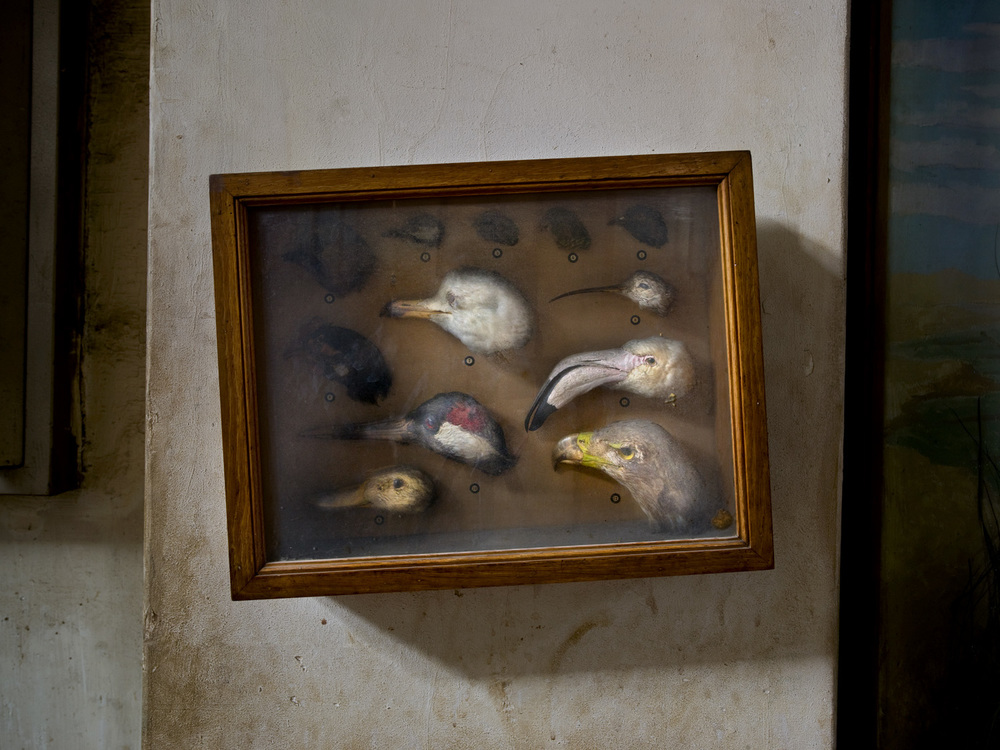 Bird Heads, The Agriculture Museum in Cairo, 2007