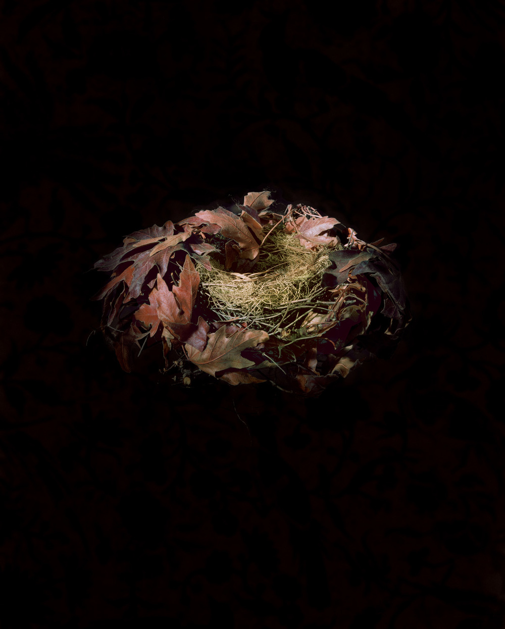 Purple Finch, 2000
