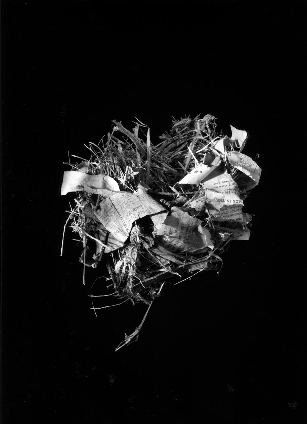 Nest #13, 2000