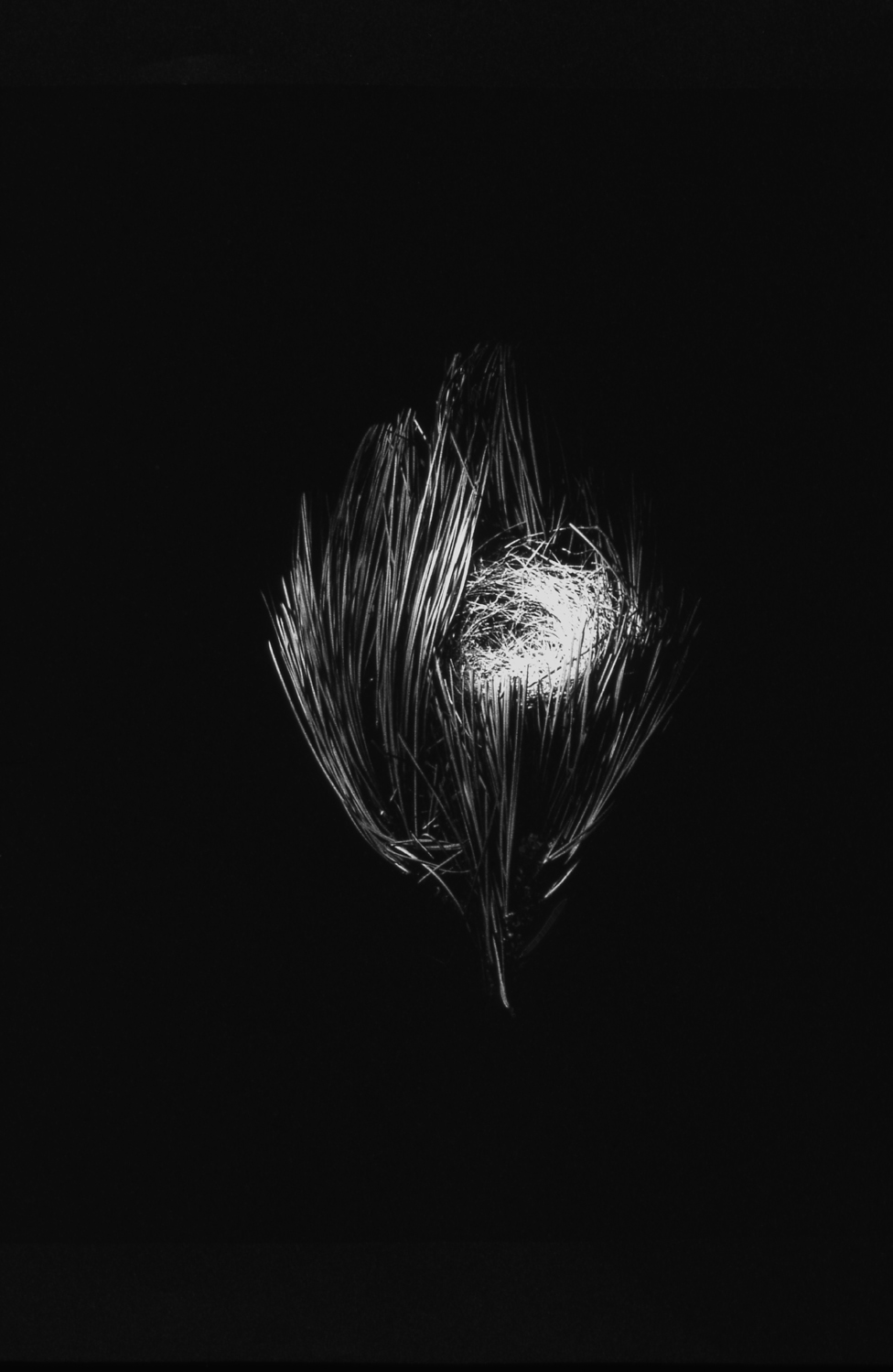 Nest #14, 2000