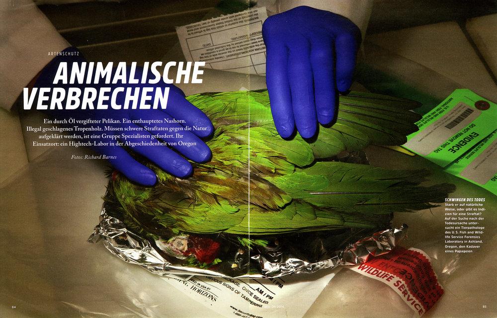 Animalische_Pages1+2.jpg