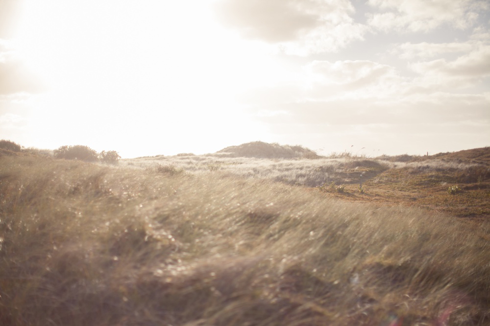 Muriwai_Beach_04.jpg