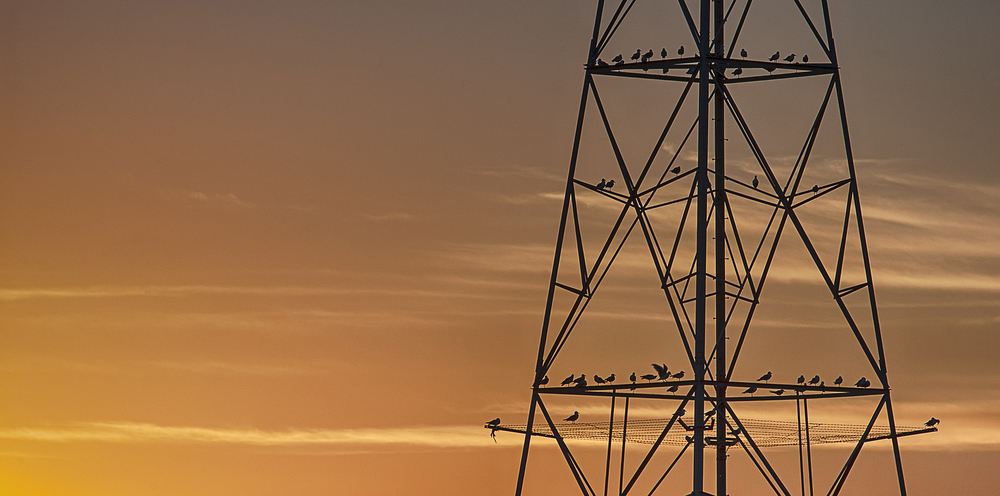birds-pylon-copy.jpg