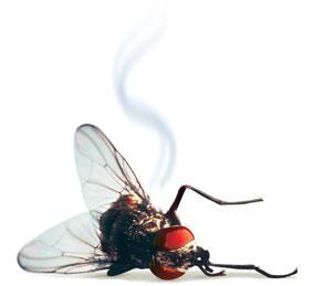 dead fly-1.jpg