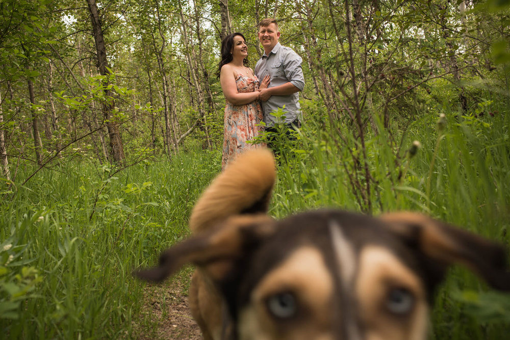 Edmonton-wedding-photographers-engagement-dogs-nicole-bryan-04.jpg
