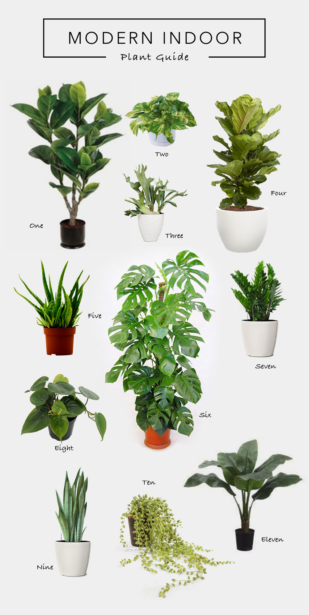 Rubber Tree   Heart Leafed Philodendron   Staghorn Fern   Fiddle Leaf Fig    Aloe Plant
