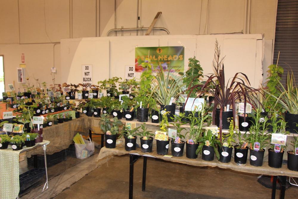 Eugene Hardy Plant Sale