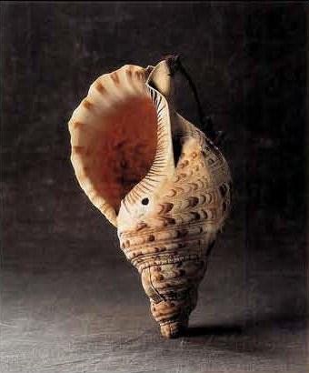 Shell photo.jpg