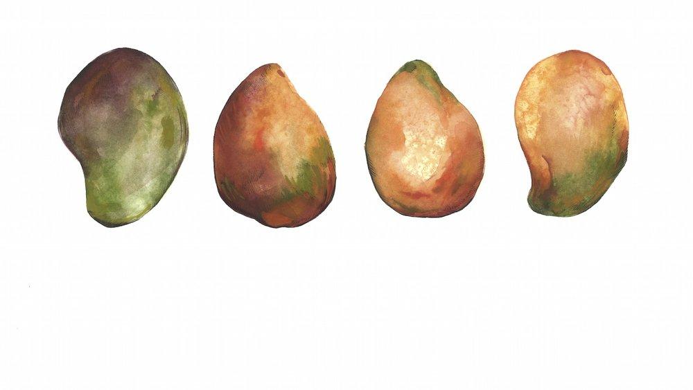 four-mangos-web.jpg