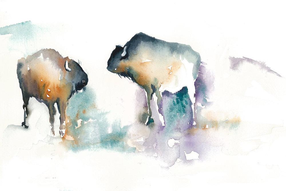 buffalo-web-2.jpg