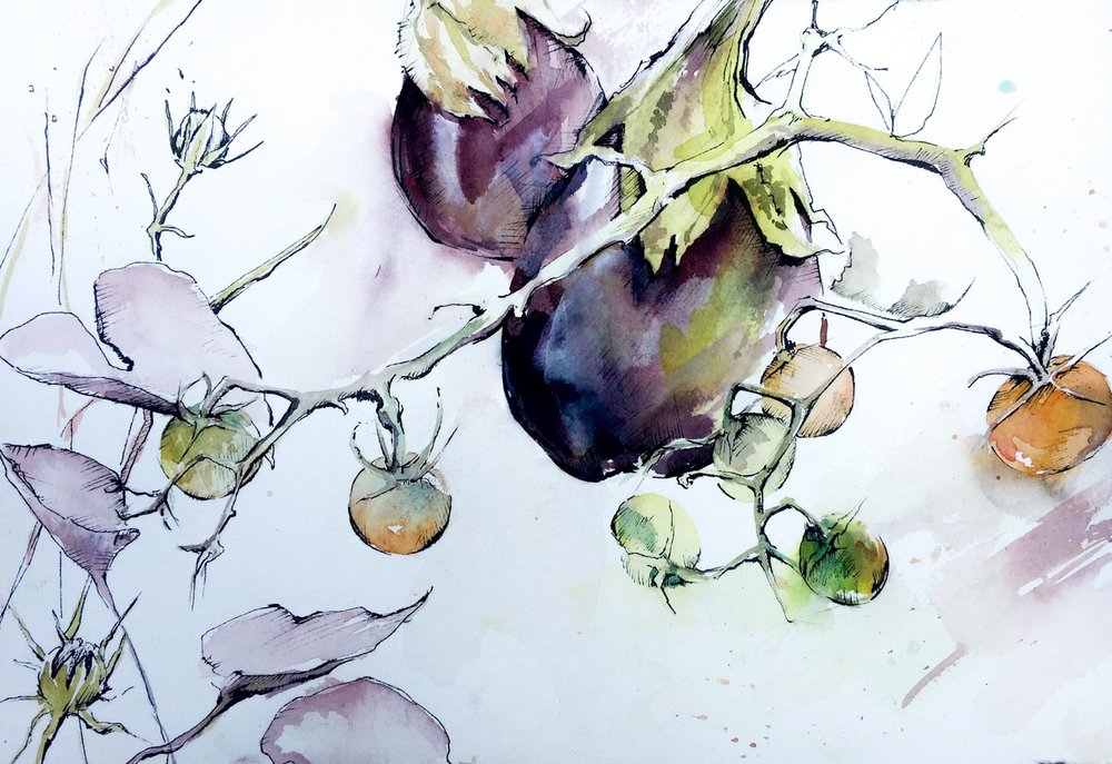 eggplant- web.jpg