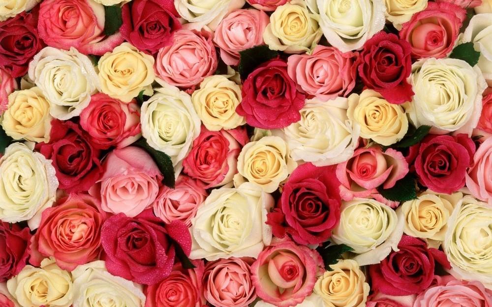 image via vegasonlyroses.com