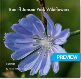 Roeliff Jansen Park Wildflowers / Summer