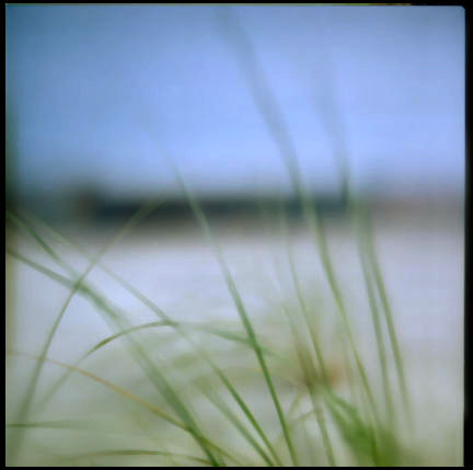 Beach Grass, Nissequogue, NY