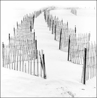 Dune Fences, Nissequogue, NY - Carbon Ink Print