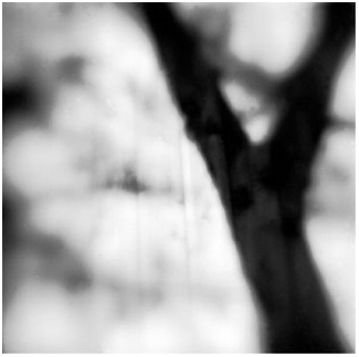 Tree Trunk, Miller Place, NY - Platinum Print