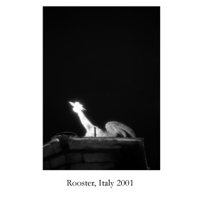rooster, italy.jpg