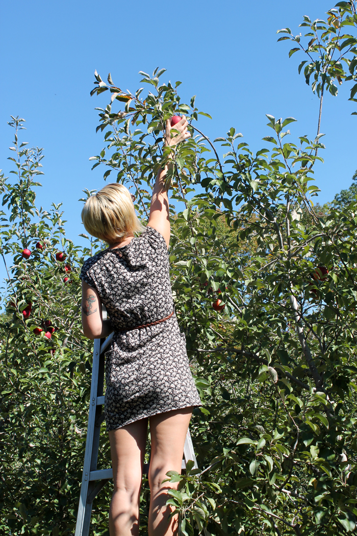 Apple-Picking-6.jpg