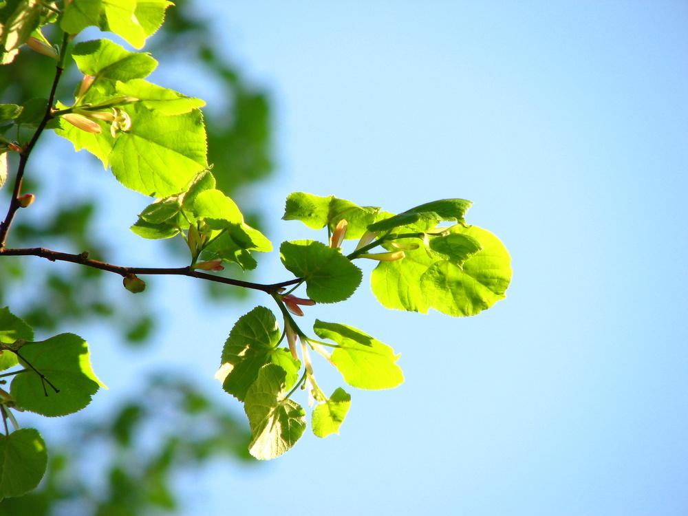 Frisches Grün an altem Baum 1