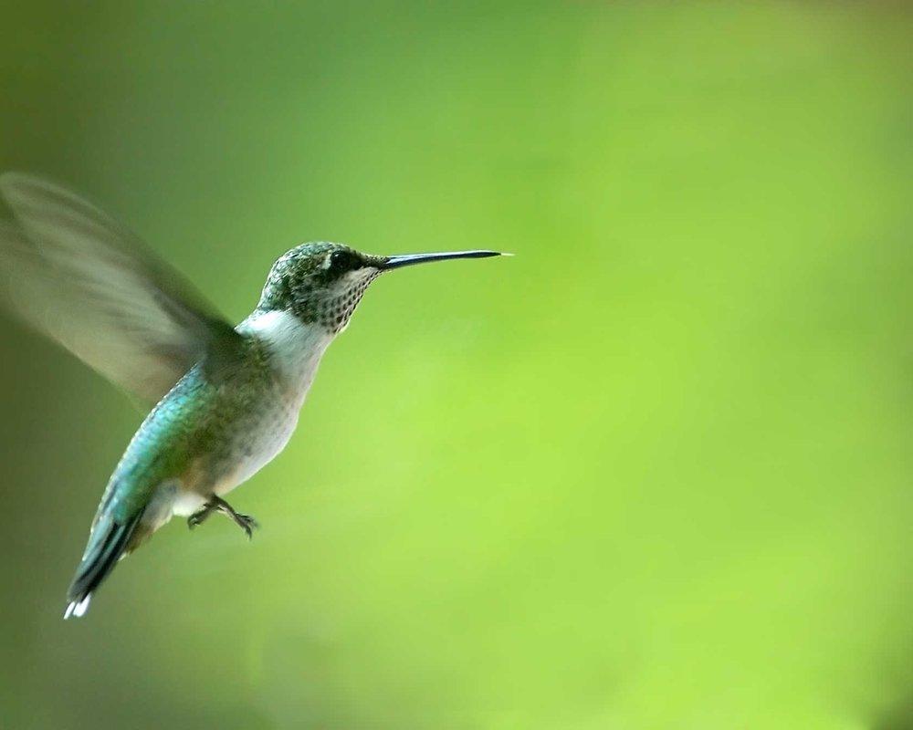 flutter -