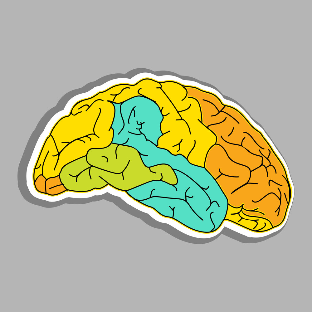 abstract-medical-concept-with-colorful-human-brain-on-grey-background_QkMrT4_L.jpg