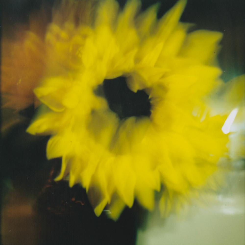 Sun Flower - 2/13/2015