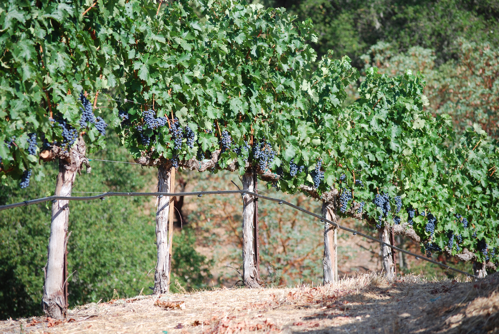 Upper Vineyard Full Fruit
