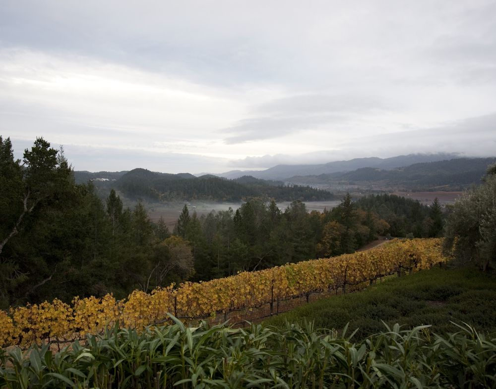 Fall in the lower vineyard