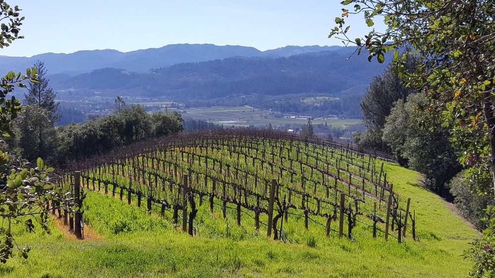 Upper Vineyard Spring 2016
