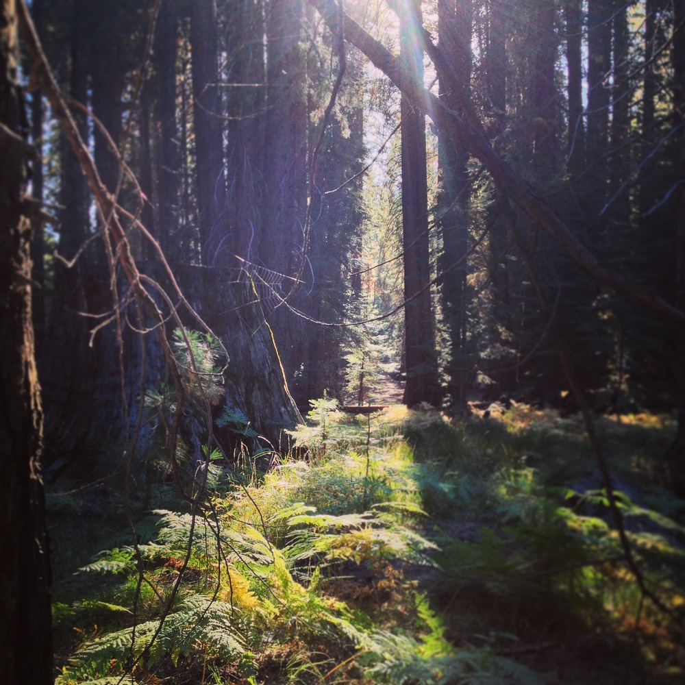 Photo from Angeles National Forest, 2014