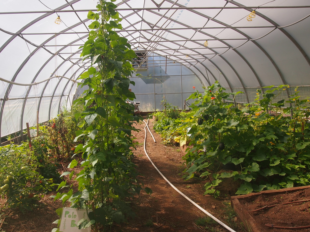 The Greenhouse - contributed by New Life Church of Abbotsford after our old one blew down in a storm.  Fresh fruits and vegetables were carefully rationed prior to this gift!  Now we have fresh produce year-round, not only in Esperanza but also in two neighbouring villages!