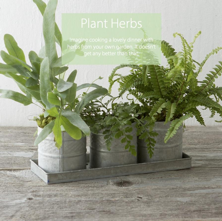 plant herbs.jpg