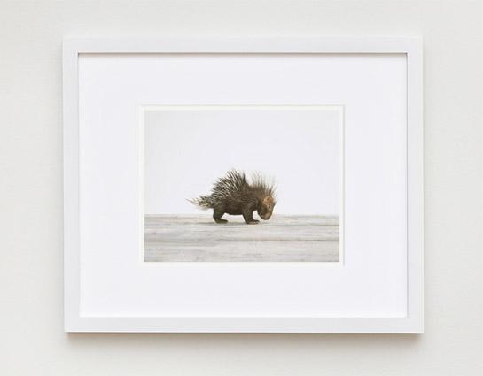 Baby-Porcupine-Frame.jpg