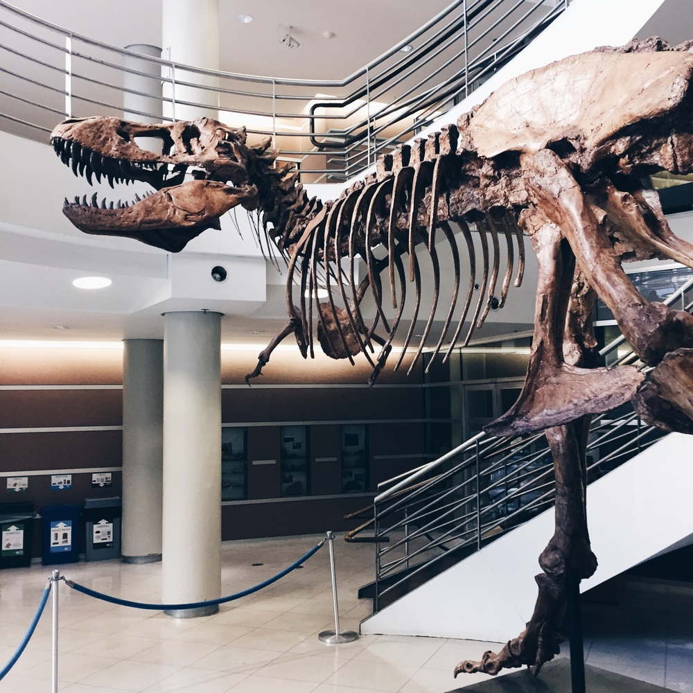 T-Rex at the UC Berkeley Paleontology Department