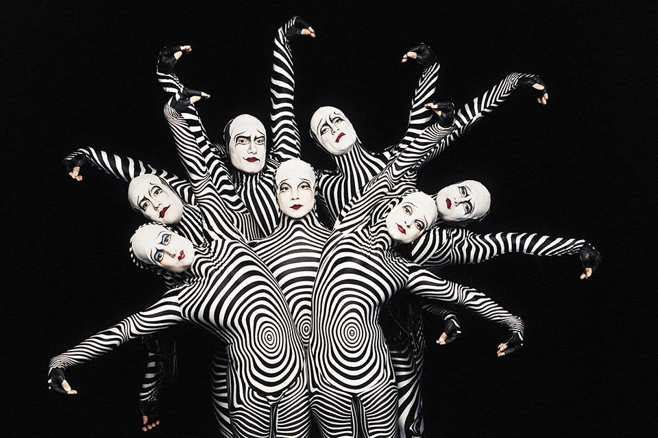 """Zebras from """"O"""". Photo: Cirque du Soleil/Veronique Vial"""