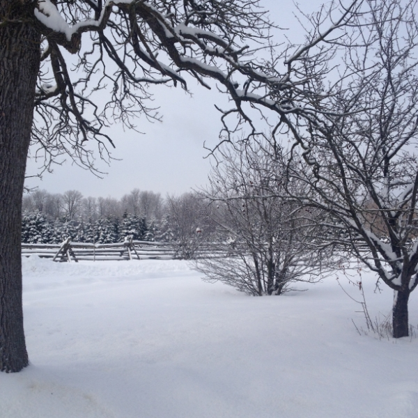 Snowy Farm.JPG