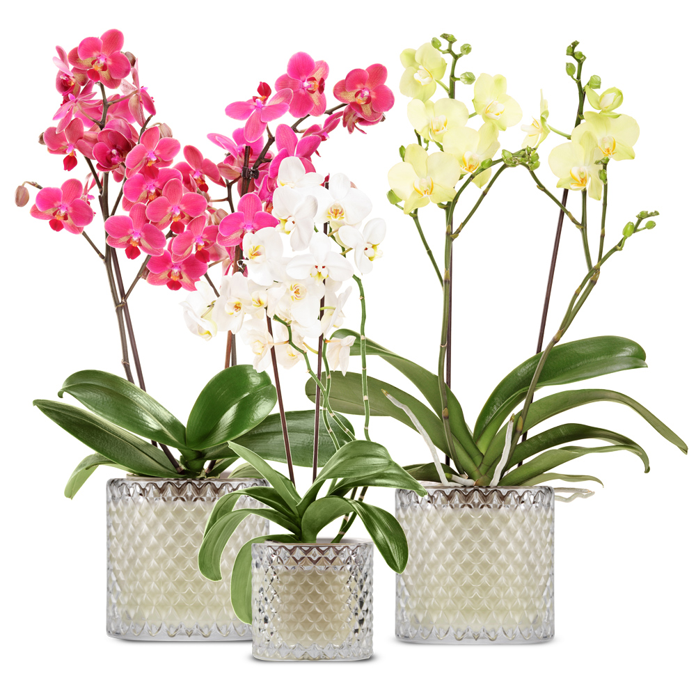 Orchid_.jpg