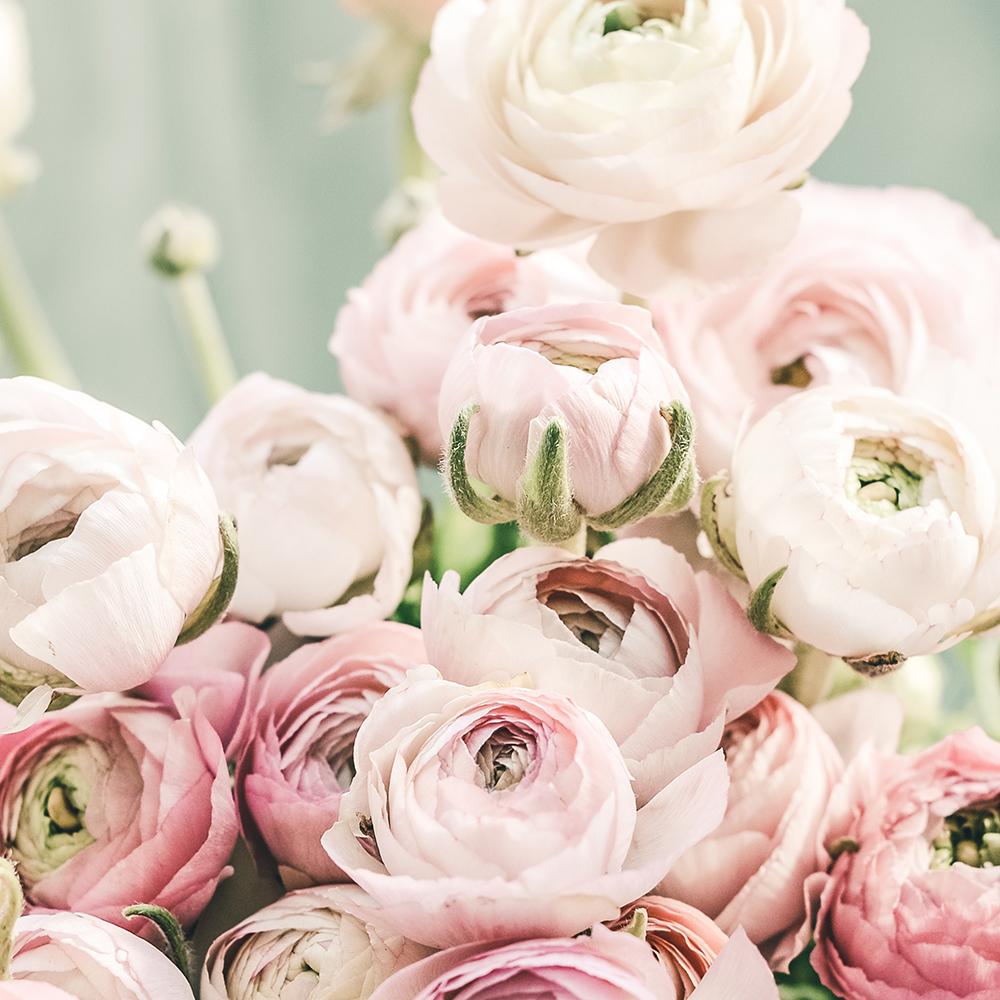 Pink_flowers_.jpg