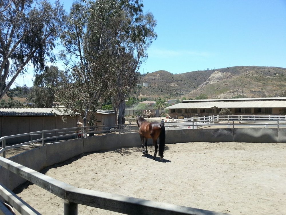 Open turn out/lunging arena