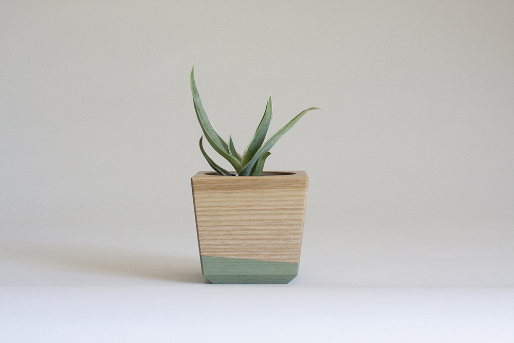 Aloe type in our Tapered Wood Planter, Ash and Sea Foam Green