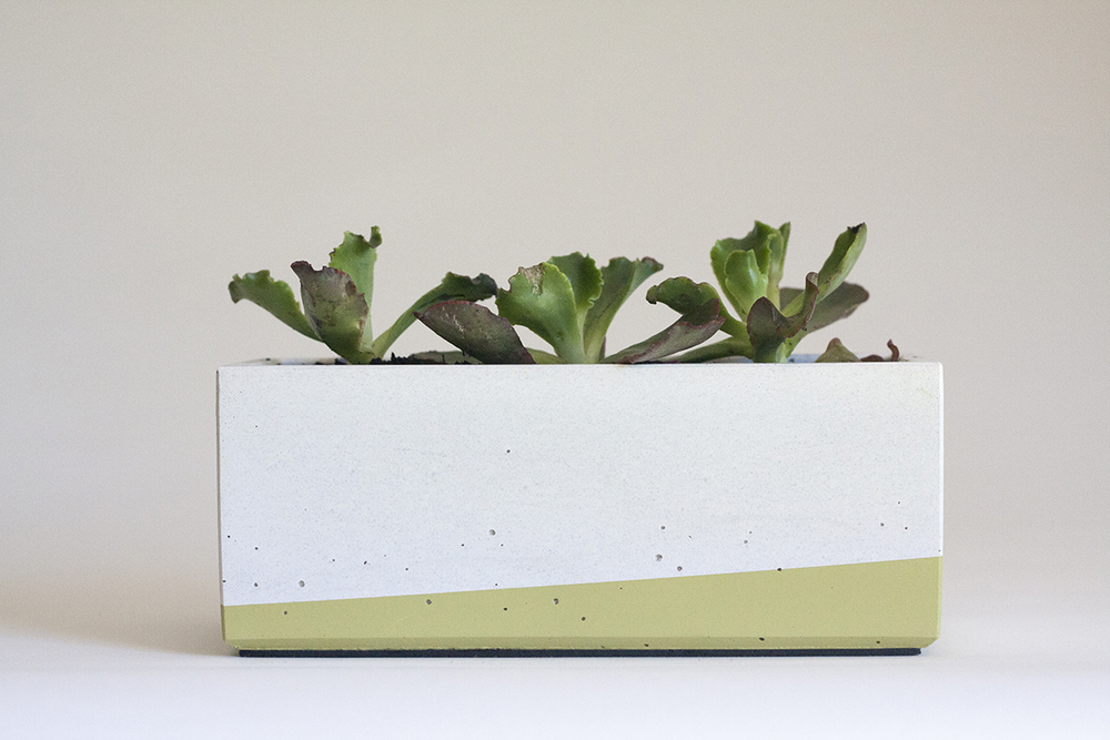 Echeveria hybrid in our Windowsill Concrete Planter, White and Lime Green
