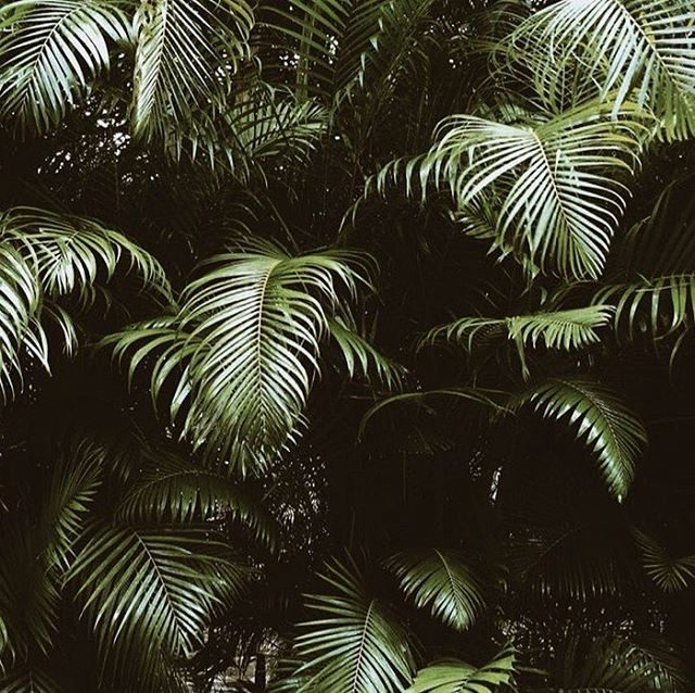 A shot via @roseeadsdesign blog. Day 1. :: :: Join me as I travel with @we.do.nothing from the mountains to the sand :: - - - - - - - - - - #wedonothing #ethicalclothing #adventureclothing #travelessentials #wedonothingclothing - #waikiki #wandering #palmtrees🌴  #wandermust  #oahu #surfblog #hawaii #mountains #mysurflife #globelletravels #roamingwomen #roadtrippin  #hawaiitravel #ontheroadwithrose #TheTravelWomen #passionpassport #ladiesgoneglobal #globelletravels #girlslovetravel #wearetravelgirls #shetravels #travelgirl #shorebreak #wanderers #mountainside