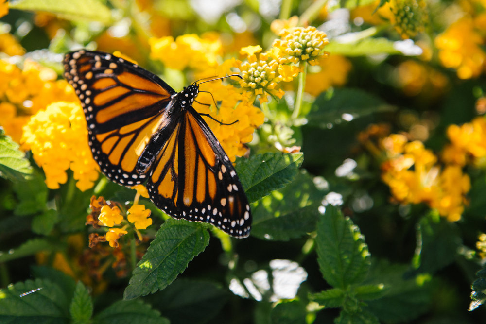Transform an organization -