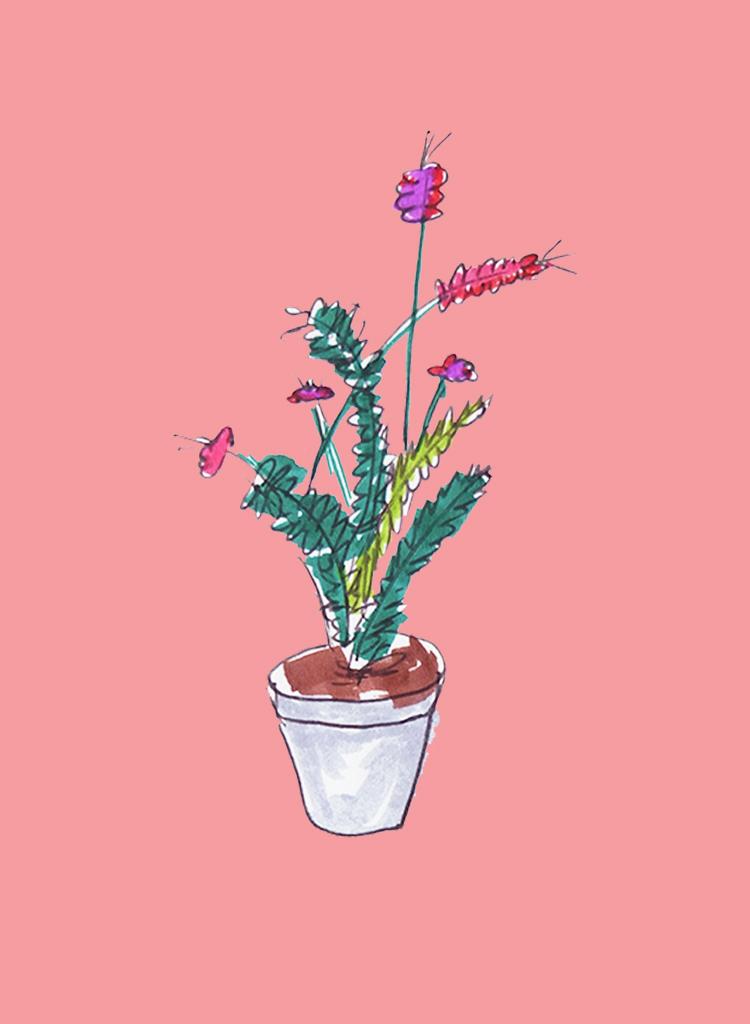 pinkplants_ameliagoss.jpg