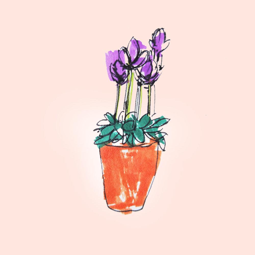 purpleblooms_ameliagoss
