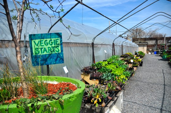 greensgrow-veggie-starts