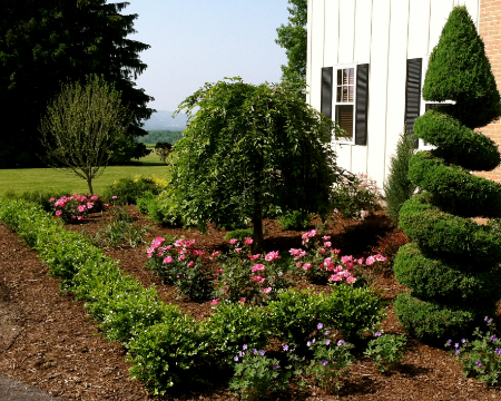 Boxwood, roses, weeping cherry and scented geraniums planted in Cortland, NY.
