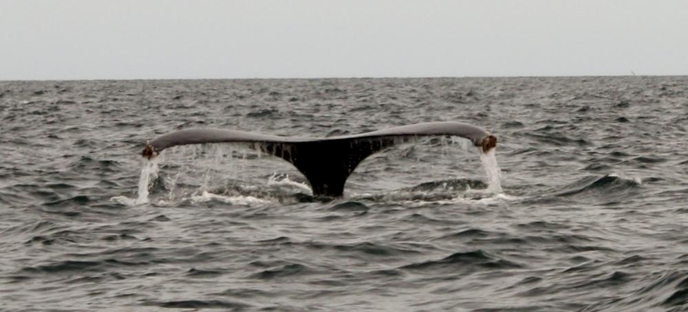 Whale scouting near Loreto Bay